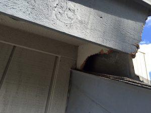 Jacksonville wildlife control